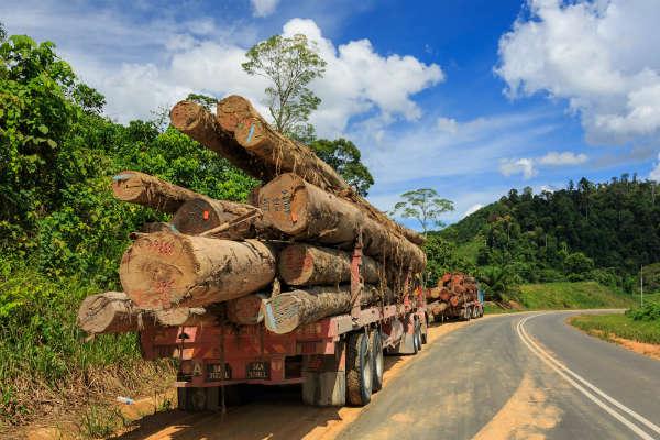 District-Tawau_Sabah_Logging-Trucks-01